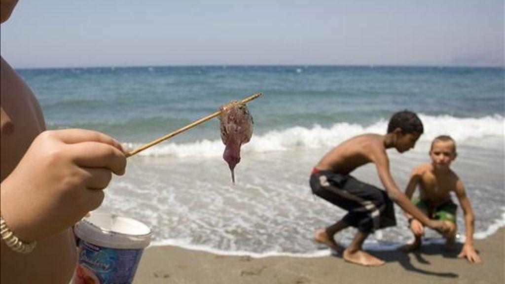 Unos niños juegan en la playa con unas medusas. EFE/Archivo