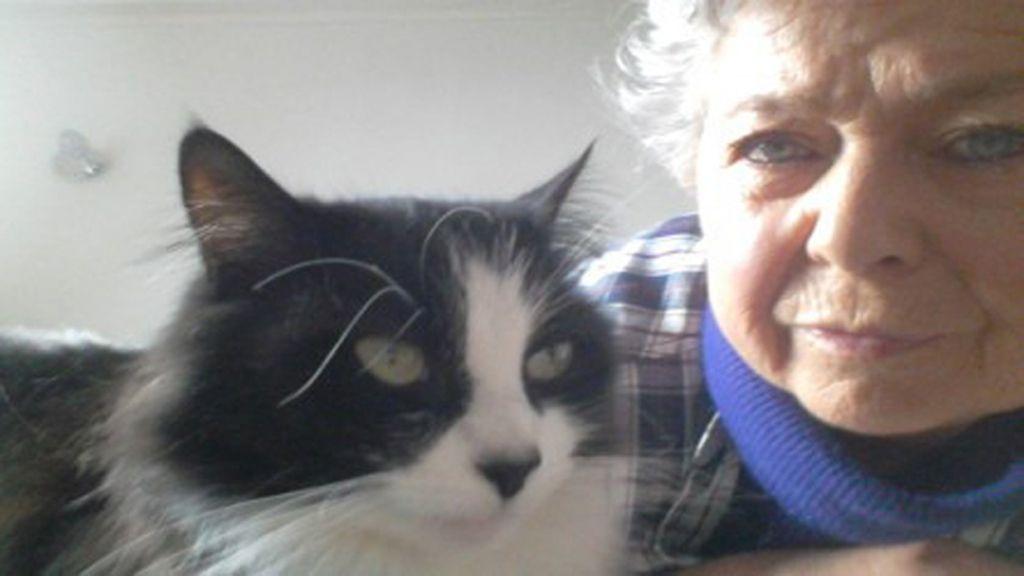 Un gato recorre 1.116 kilómetros durante un año y medio para reencontrarse con su dueña