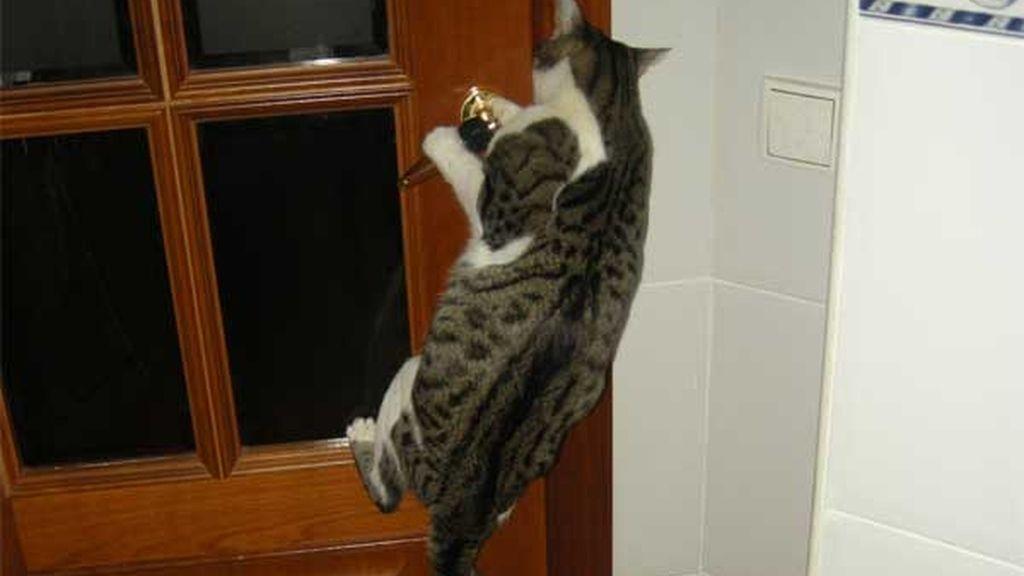 Zeus abriendo la puerta
