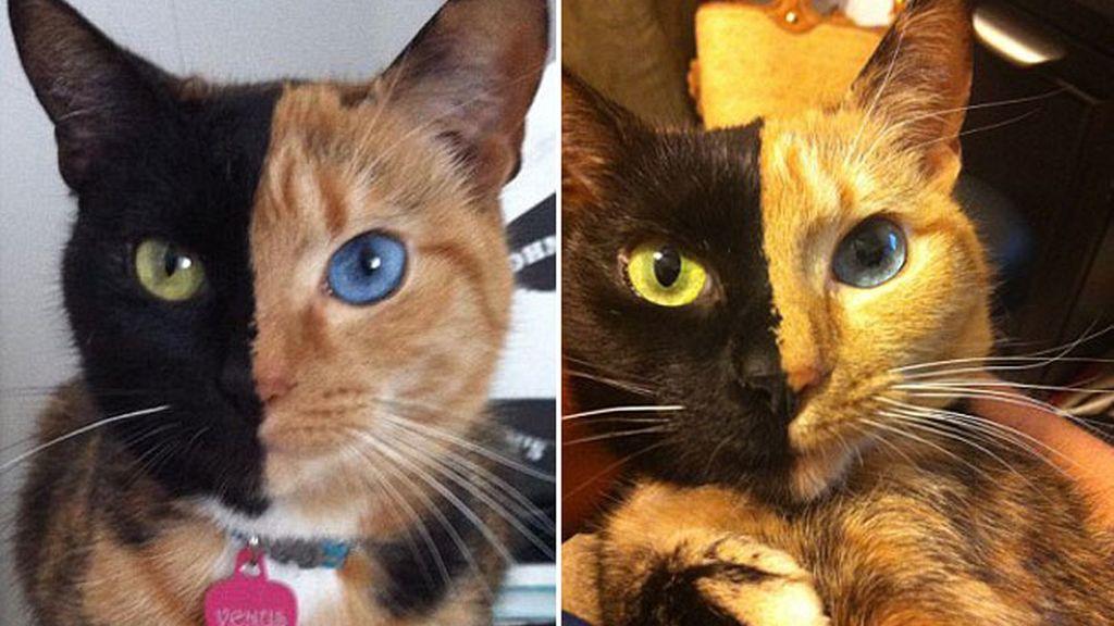 El gato de las dos caras