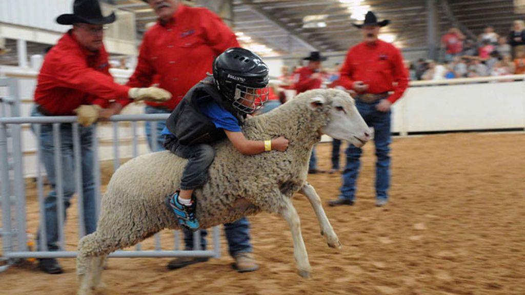 ¡Cuidado! niño a lomo de una oveja