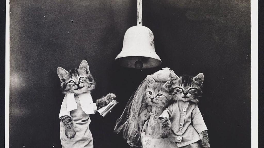 A estos gatitos les falta hablar