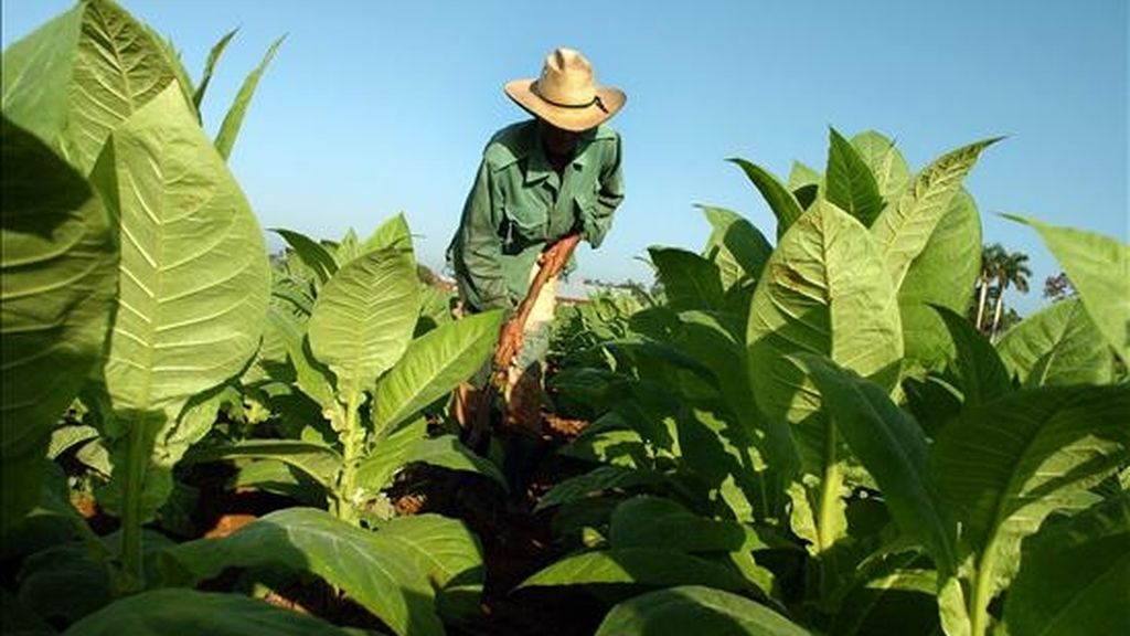 """El nuevo sistema se pondrá a prueba primero en la provincia y la ciudad de La Habana, donde se crearán 23 nuevas empresas agrícolas con """"autonomía financiera"""". EFE/Archivo"""