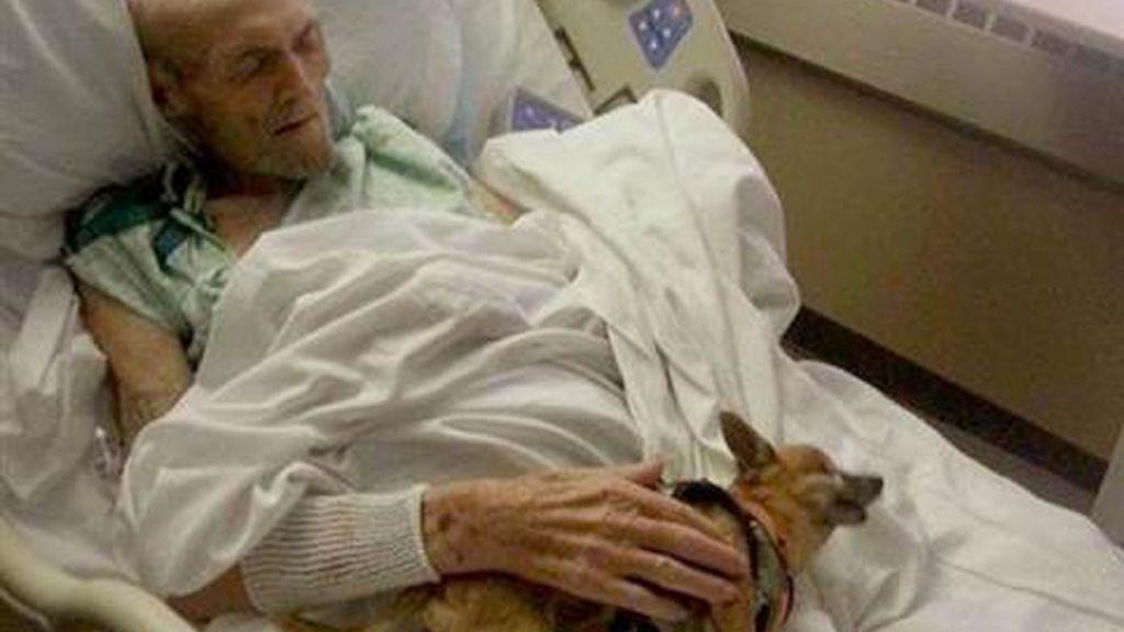 Un hombre hospitalizado mejora tras reencontrarse con su perro