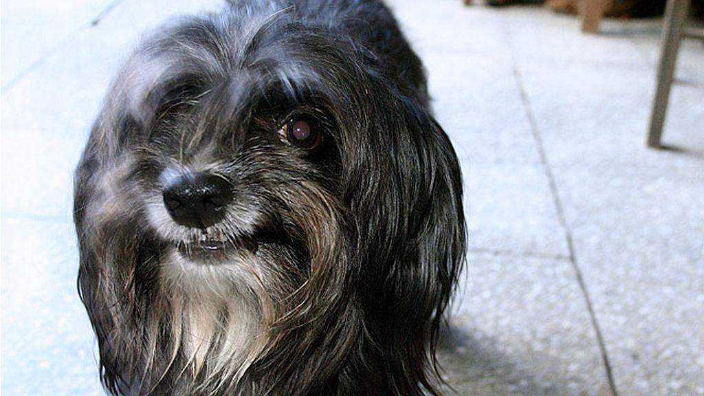 Los beneficios de tener un perro en casa