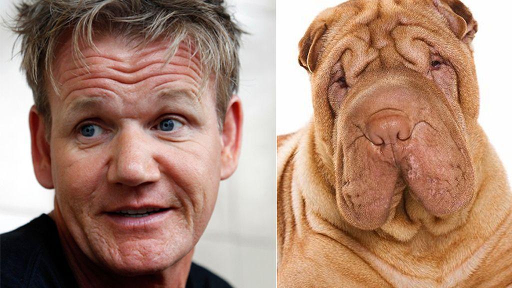 El chef de cocina Gordon Ramsay y el perro Shar Pei