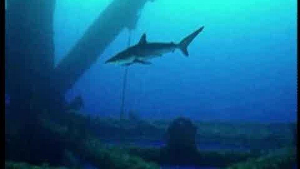 El fondo submarino del Golfo de México