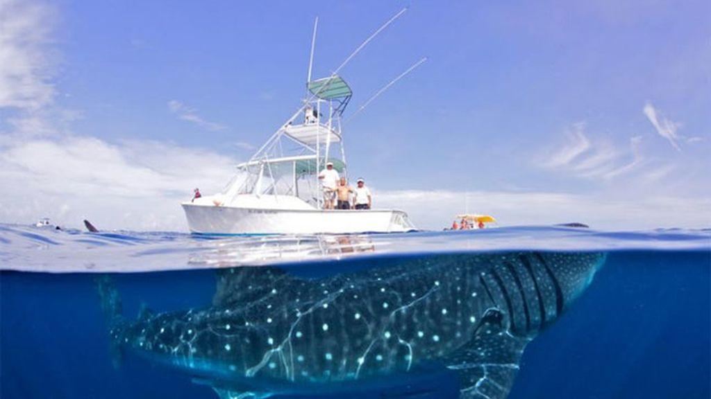 Las ballenas de Shawn Heinrichs sin trampa ni cartón