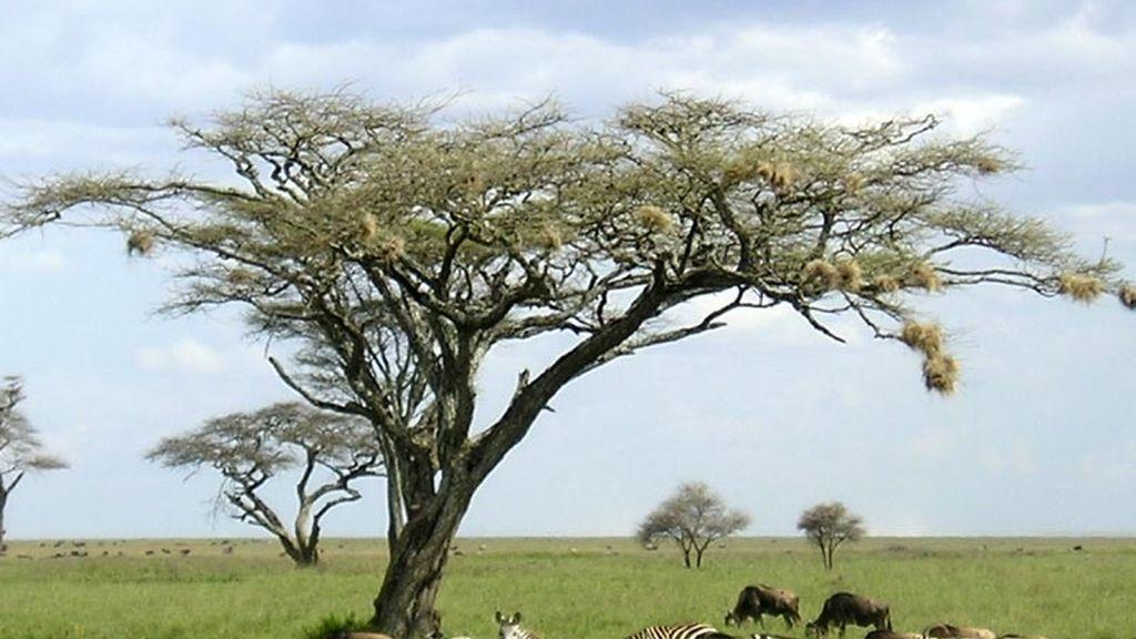 Tanzania, otro paraíso natural