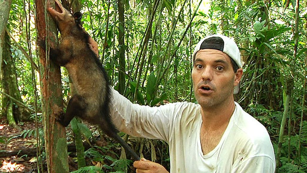 Ranas tóxicas, pumas y jaguares, víboras de pestañas…