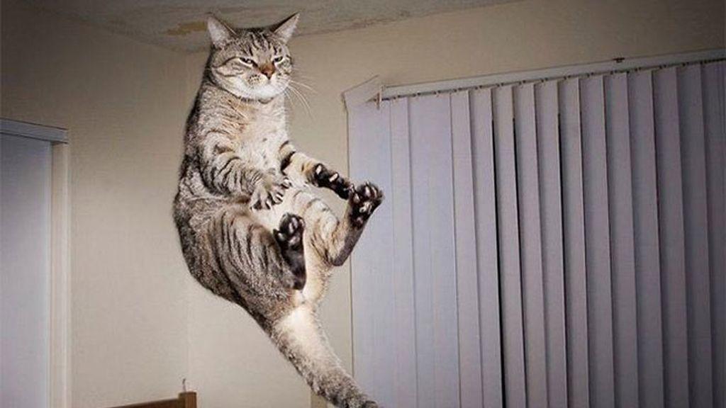 Gatos al más puro estilo Ninja