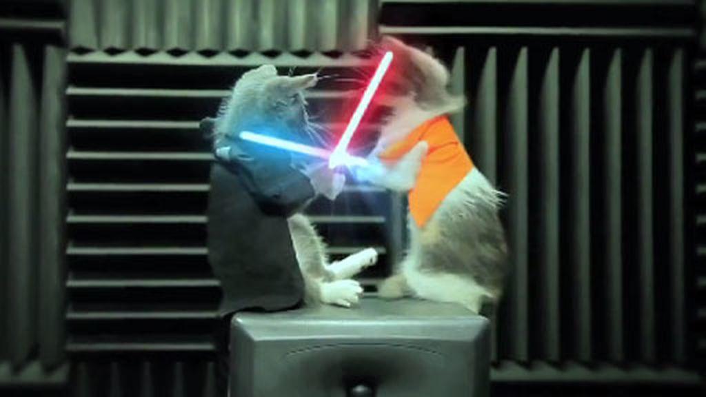 La guerra de los gatos Jedi.