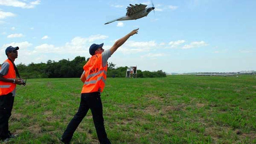 Reducirá un 45 % los choques de pájaros con aviones