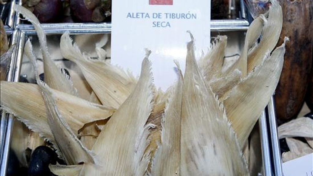 Imagen de aleta de tiburón seca, una de las rarezas que se pueden encontraron el pasado año en Madrid Fusión. EFE/Archivo