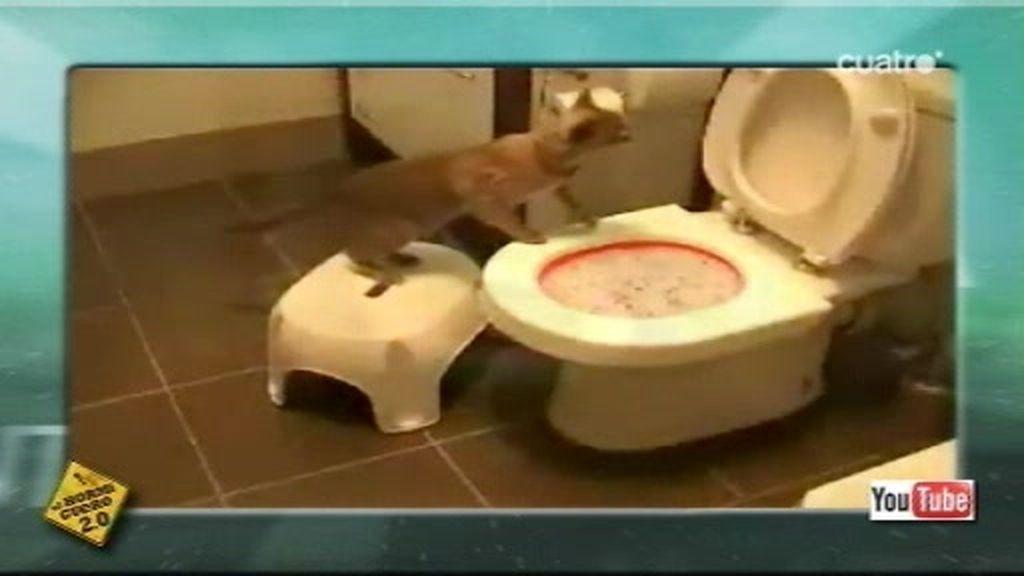 La teletienda internacional te muestra el váter para gatos