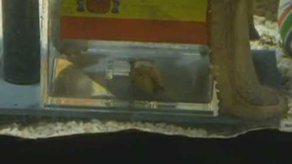 paul coge su manjar del interior de la urna