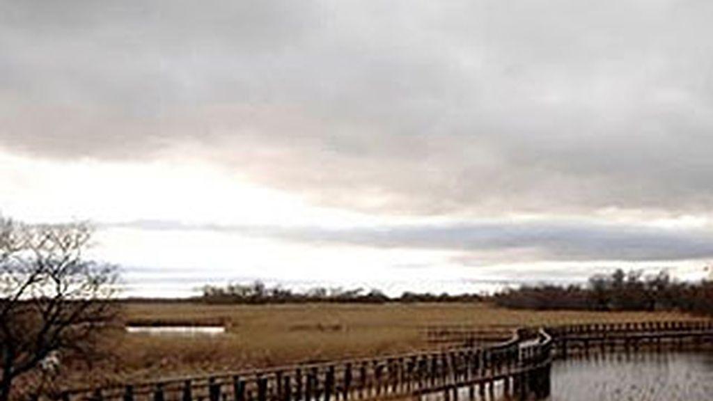 El Parque Nacional de las Tablas de Daimiel, uno de los humedales más importantes de España, es uno de los más afectados. Foto: EFE.