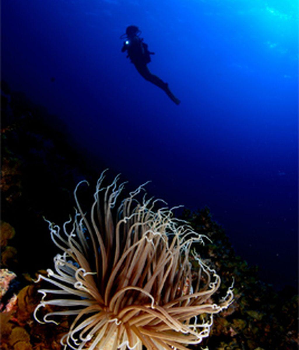 Los fondos marinos de El Hierro