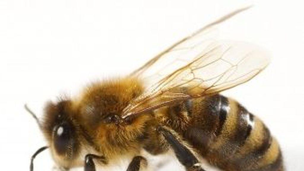 Las abejas comenzaron a volar entre los pasajeros sembrando el pánico en el vuelo que se dirigía a Moscú.