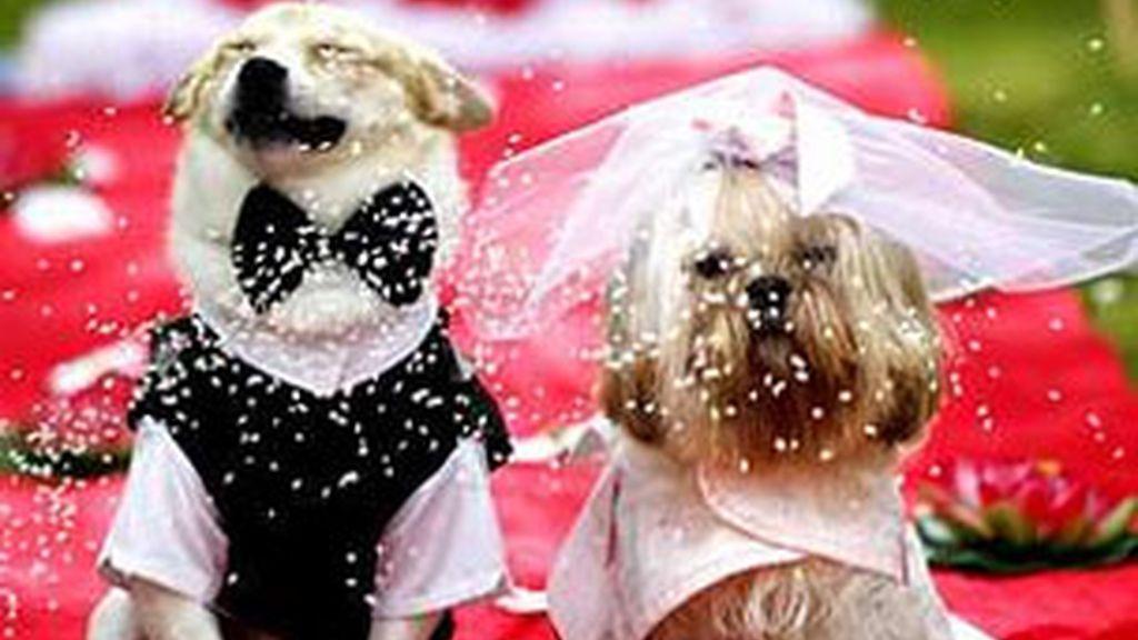 Nacha y Panho, recién casados. Foto: Lavozdegalicia.es