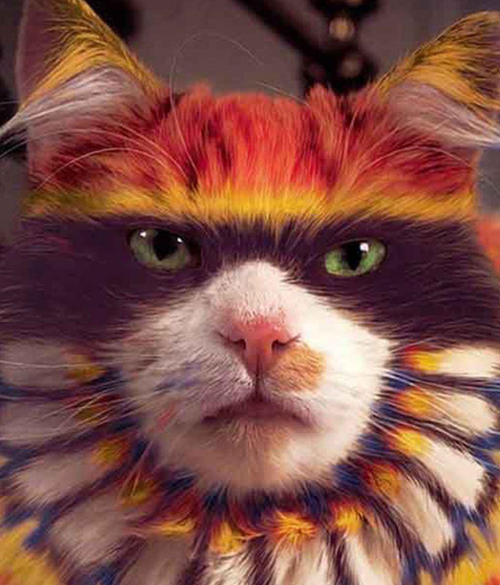 Gatos coloridos