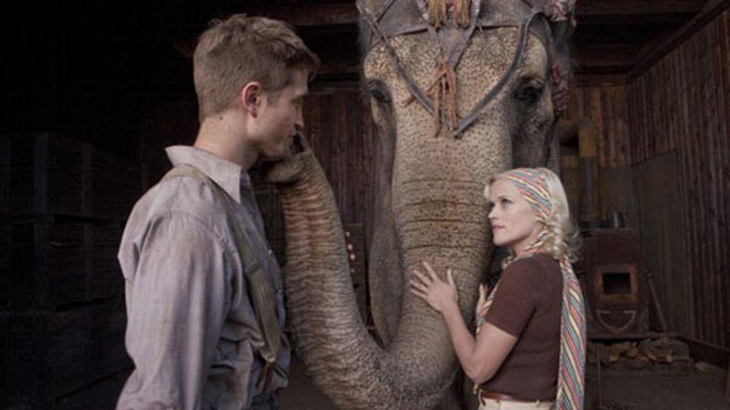 'Agua para elefantes', en imágenes