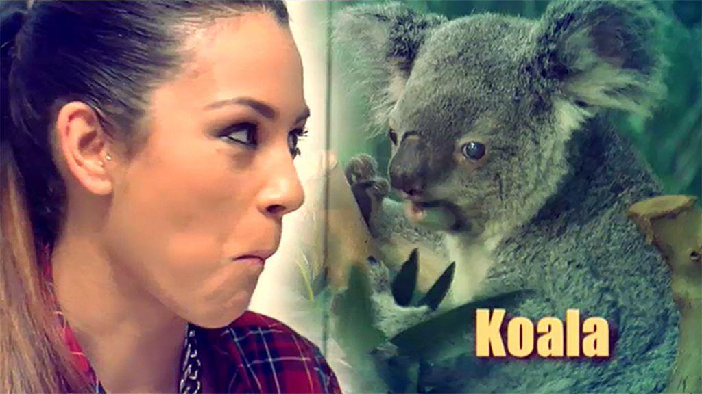 Shaila y el koala… ¿Coraima?
