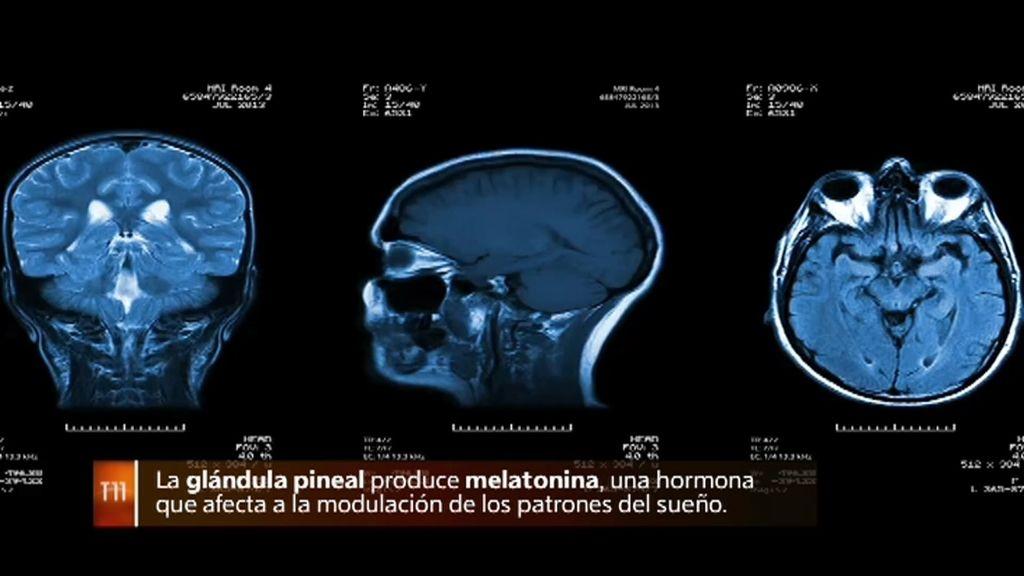 Glándula pineal: conexión del cuerpo físico con el alma y lo místico