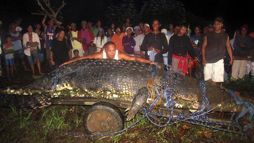 Cocodrilo gigante cazado en Filipinas. Foto: AP