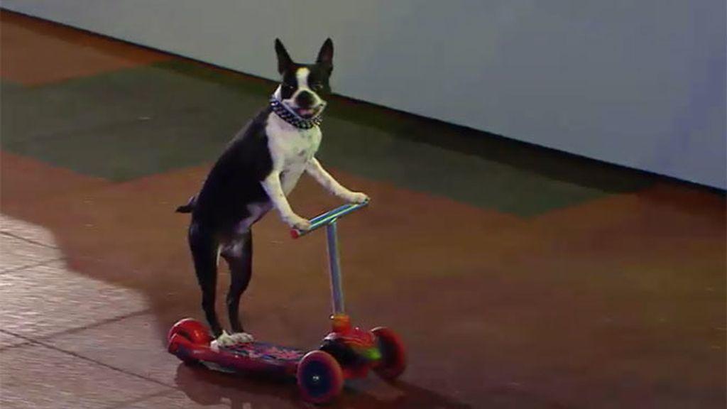 Los perros de Kang se divierten haciendo skateboard y montando en monopatín