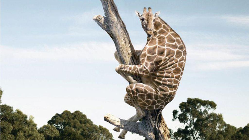 Animales sin cuello