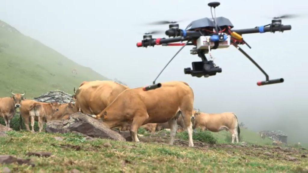 ¿Podrán los drones hacer de pastores?