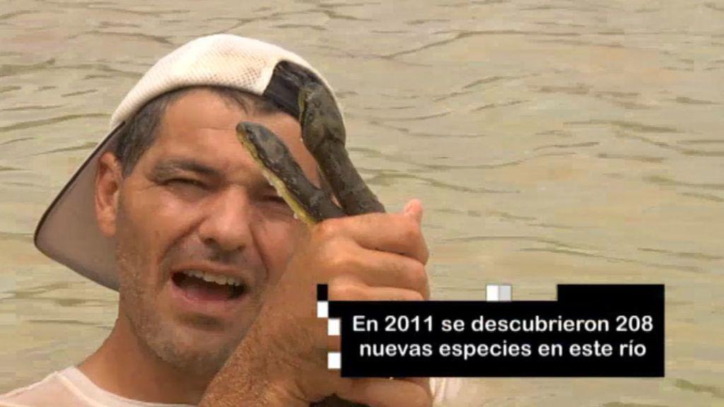 De Frank de la jungla a Frank del río