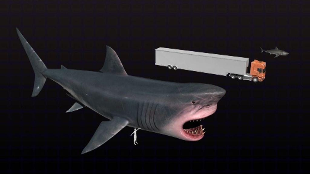 ¿Existe hoy en los océanos el 'Megalodón', un tiburón de hasta 22 metros de largo?