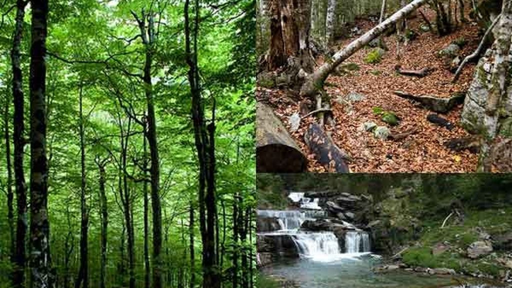 Ordesa: El bosque de las hayas