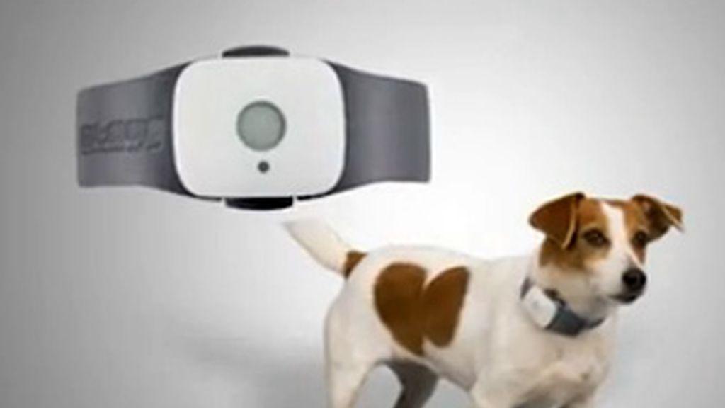 El dispositivo evitará que las mascotas puedan perderse gracias a la tecnología de localización satelitar que dará la posición del animal en todo momento.