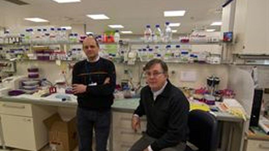 Investigadores españoles consiguen frenar la metástasis del cáncer de colon