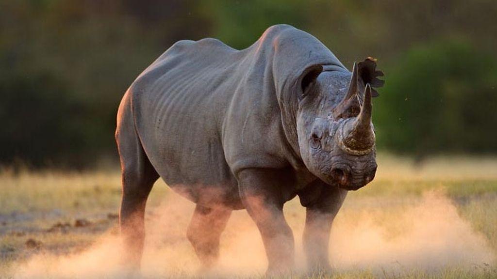 El sorprendente mundo animal