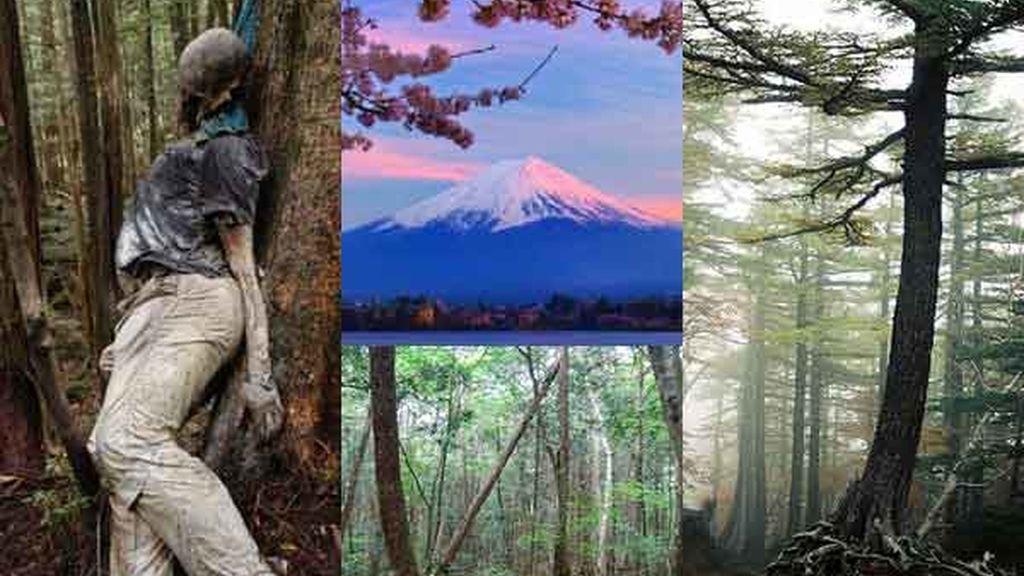 Bosque Aokigahara: El bosque de los suicidios
