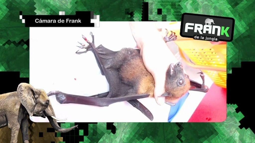 Frank cura a un murciélago herido