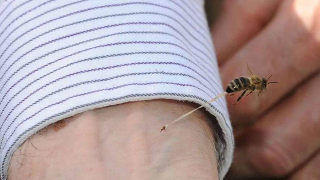 La impresionante foto de una abeja clavando su aguijón