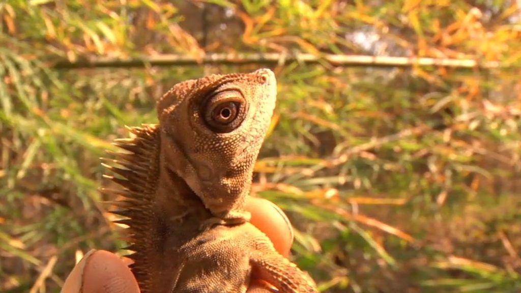Frank nos muestras algunas de las especies más raras de Asia en  'Un viaje animal 1'