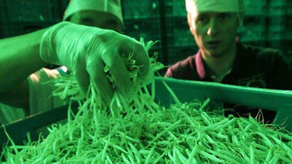 Un laboratorio alemán hace pruebas a soja. Vídeo: Informativos Telecinco.