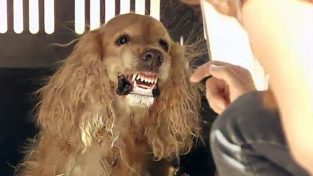 César elige a un educador canino para que sea su nuevo dueño