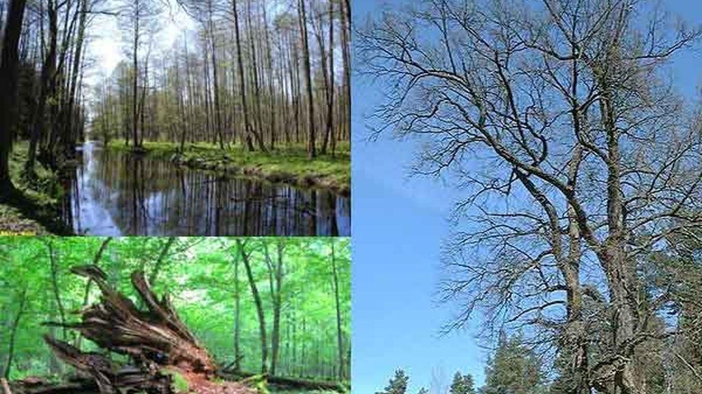 Bosque de Bialowieza: La selva virgen en Polonia