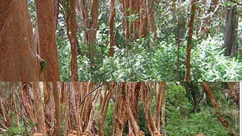 Bosque de Arrayanes: Un encuentro con la naturaleza