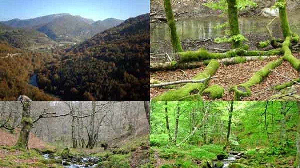 La selva de Irati: El bosque de los bosques