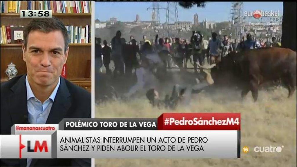 """Pedro Sánchez, sobre el toro de la Vega: """"El alcalde representa a los ciudadanos de Tordesillas, no al PSOE"""""""