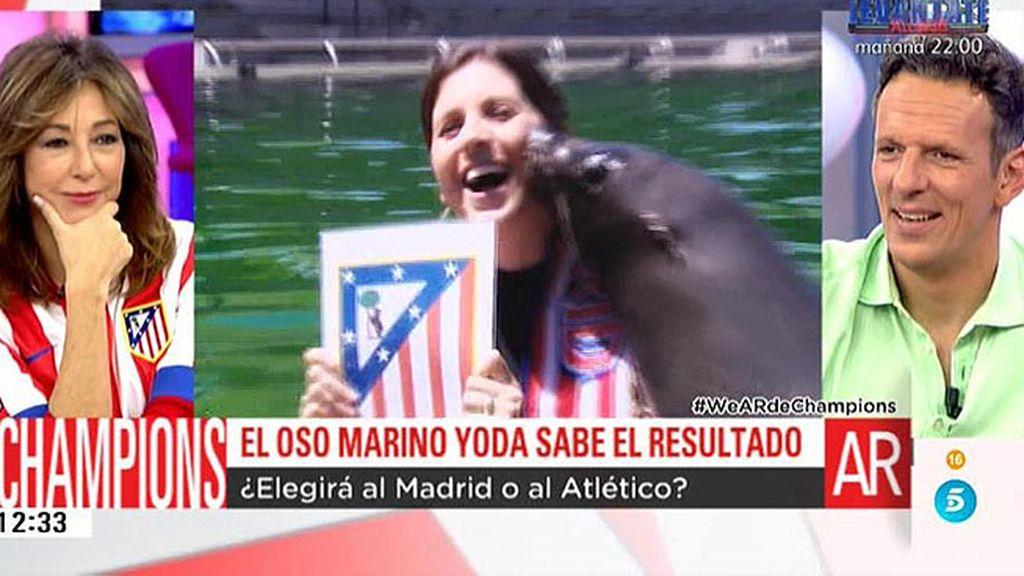 El oso marino Yoda lo tiene claro: el Atlético de Madrid conseguirá su primera Champions