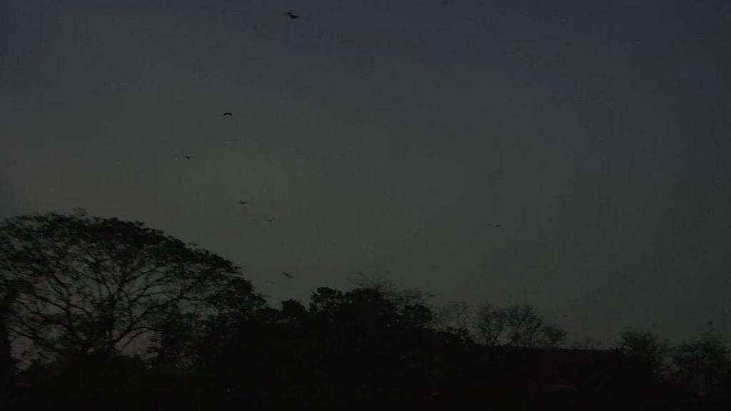 El murciélgo más grande del mundo y el más pequeño en la nueva entrega de 'Frank de la jungla''